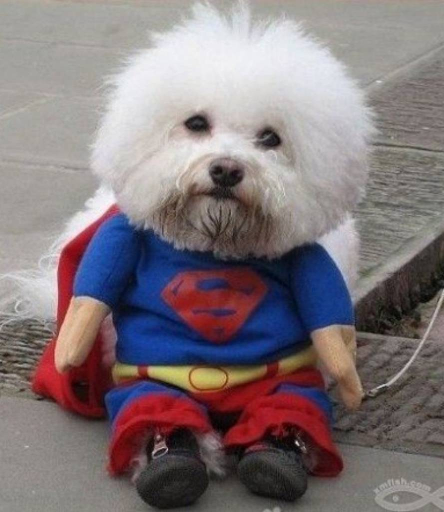Image is loading SUPERMAN-DOG-PARTY-CLOTHES-COSTUME-SIZE-IS-MEDIUM & SUPERMAN DOG PARTY CLOTHES COSTUME SIZE IS MEDIUM | eBay